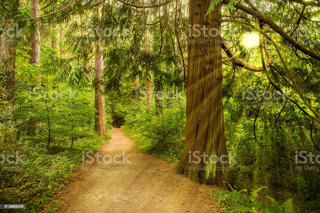 Walkway in forest stock photo