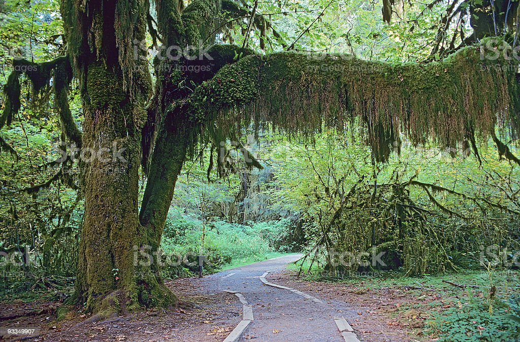 Walkway in Olympic National Park royalty-free stock photo