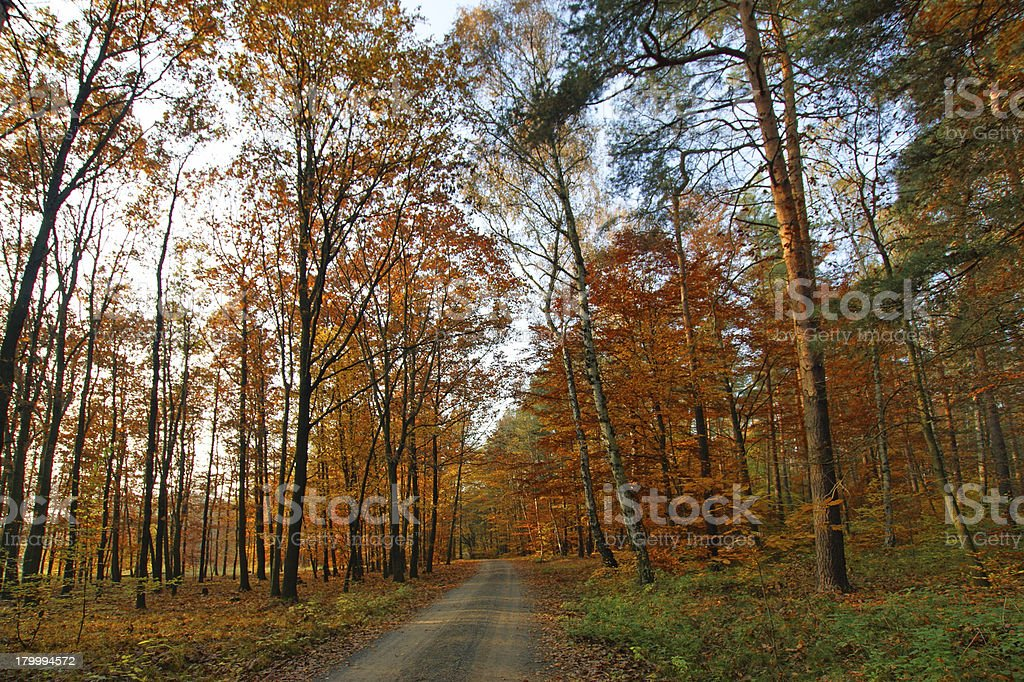 Walkway in the Autumn royalty-free stock photo