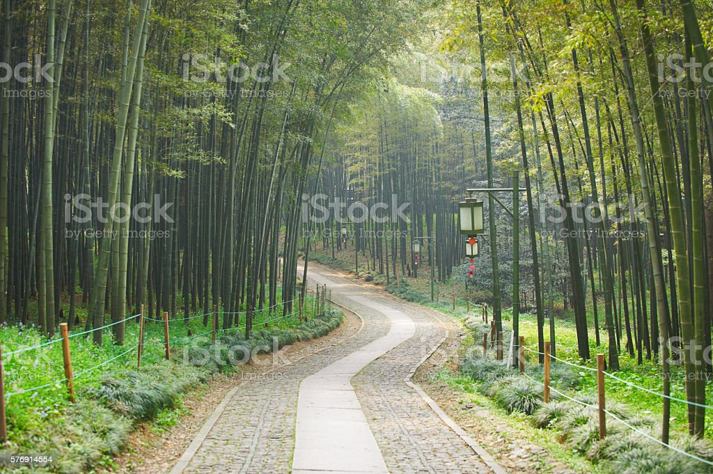 walkway in the bamboo forest stock photo