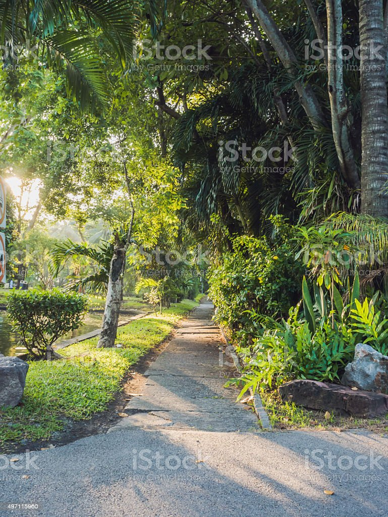 Walkway in the park in morning. royalty-free stock photo