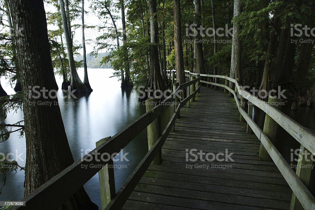 Walkway in the Swamp stock photo