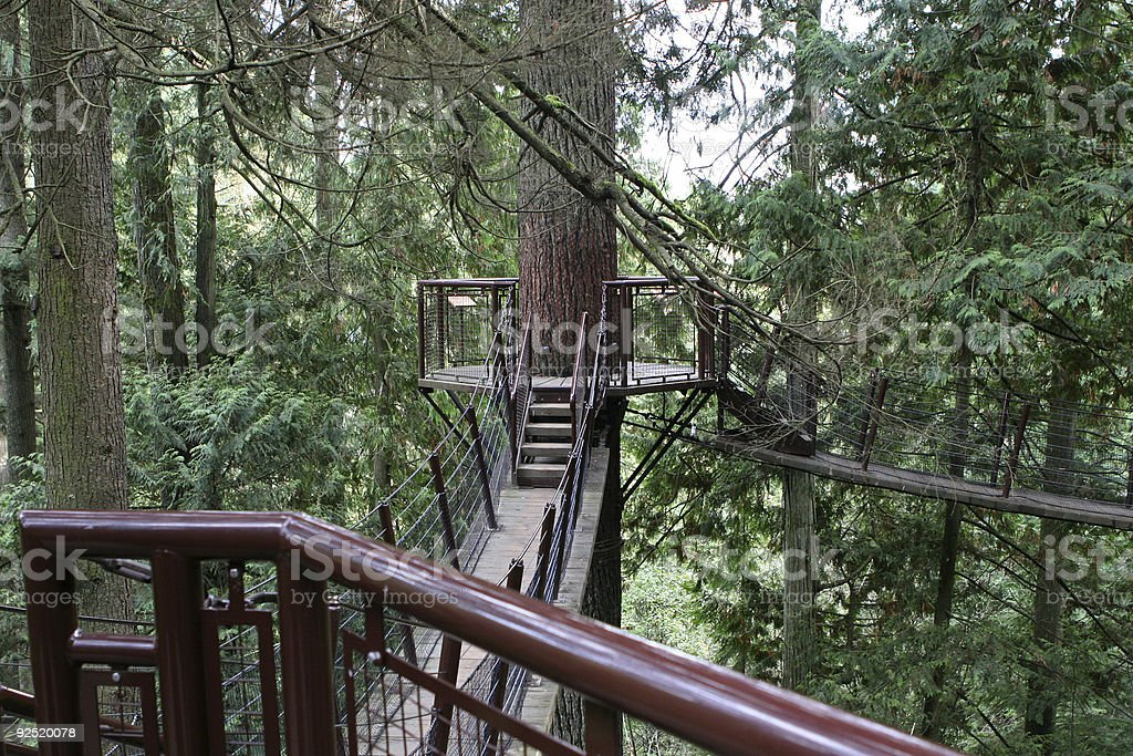 Walkway in treetops royalty-free stock photo