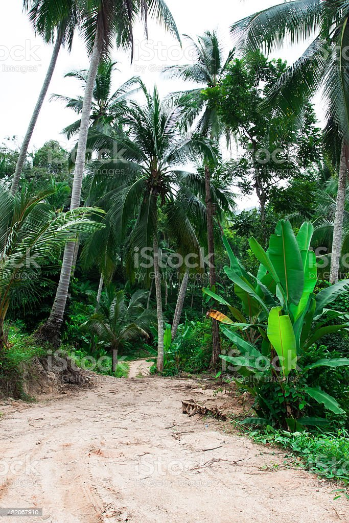 Walkway in tropical forest stock photo