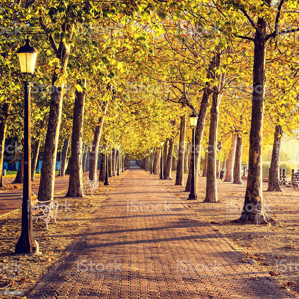 Walkway into the autumn royalty-free stock photo