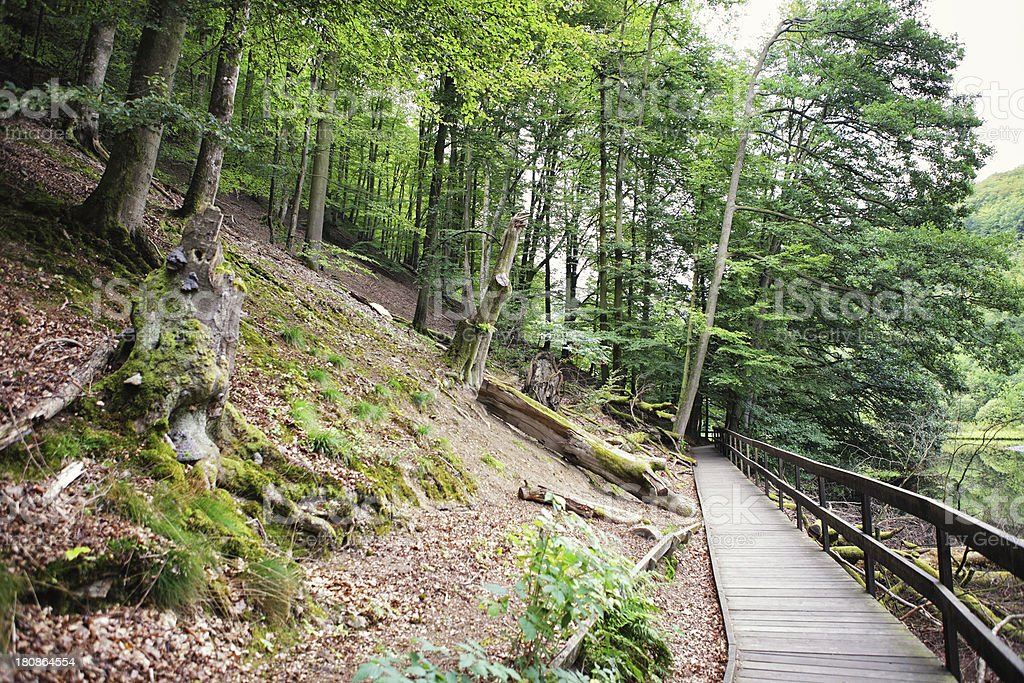 walkway next to lake and forest royalty-free stock photo
