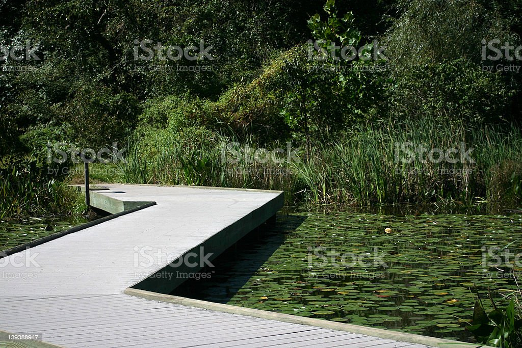 Walkway over a pond with lilypads royalty-free stock photo