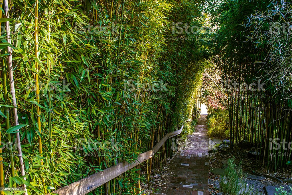 Walkway & steps surrounded by Bamboo stock photo