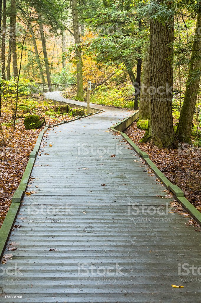 Walkway through Rhododendrons in the Autumn stock photo