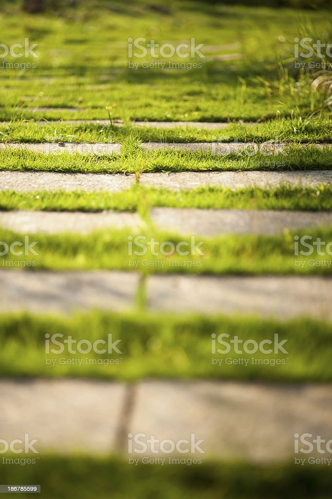 Walkway with Green Grass stock photo