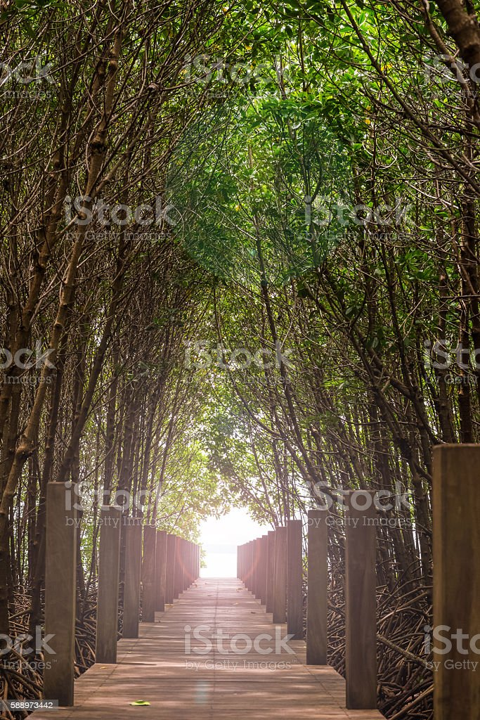 Walkway wooden bridge through mangrove forrest in Chantaburi province, Thailand stock photo