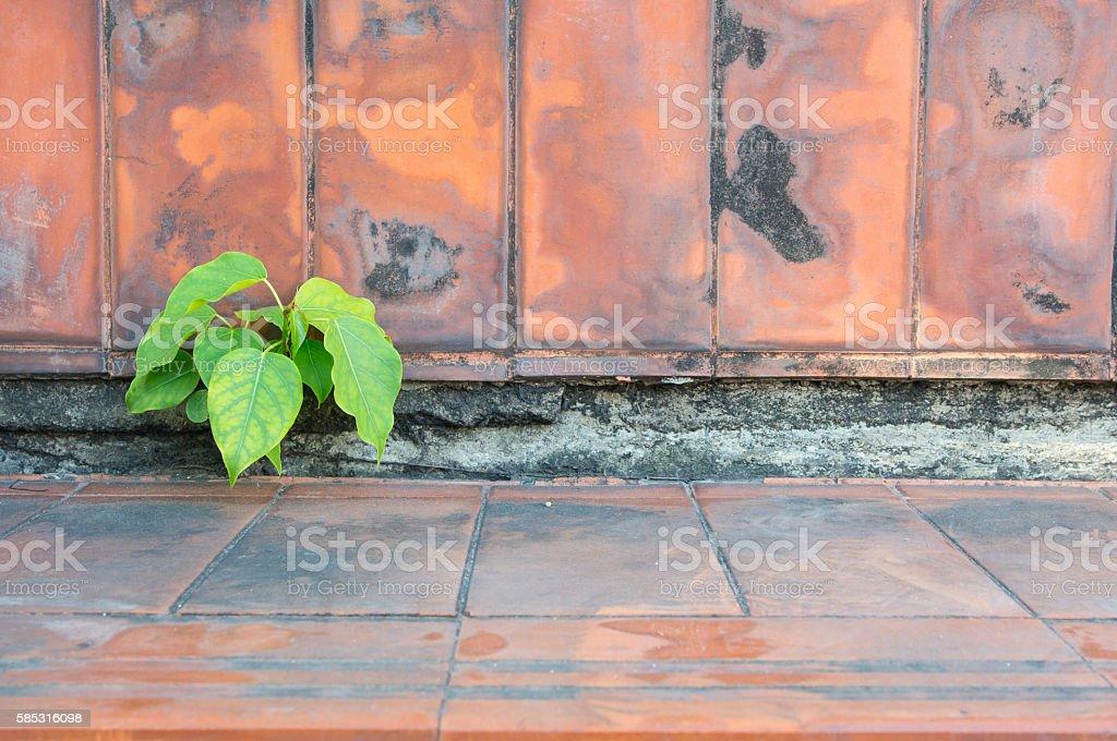 wall 17 stock photo