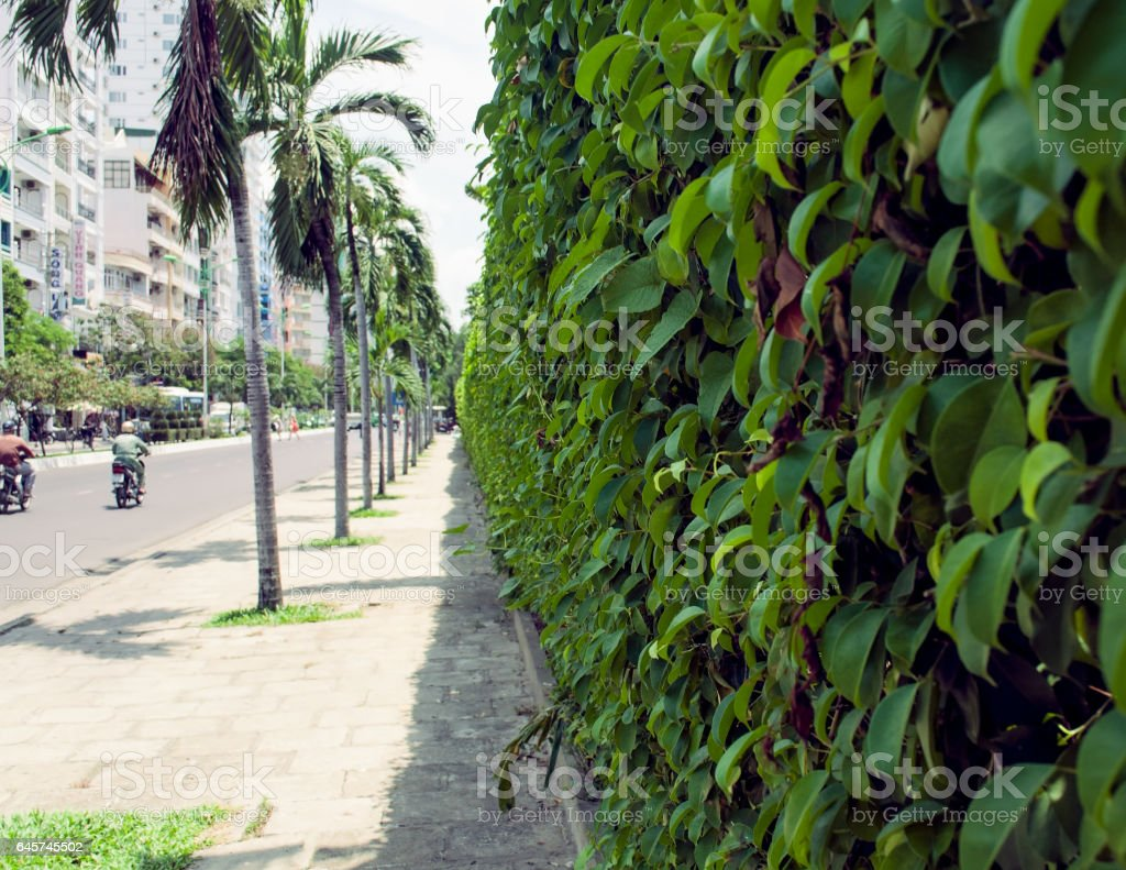 Wall along the road overgrown with ivy Nha Trang Vietnam stock photo