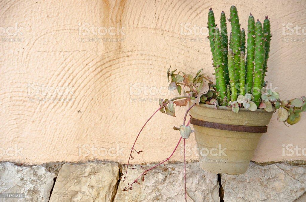 Fond mur et de cactus photo libre de droits