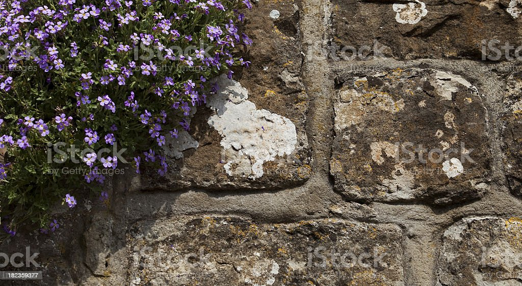 Wall and flowers royalty-free stock photo