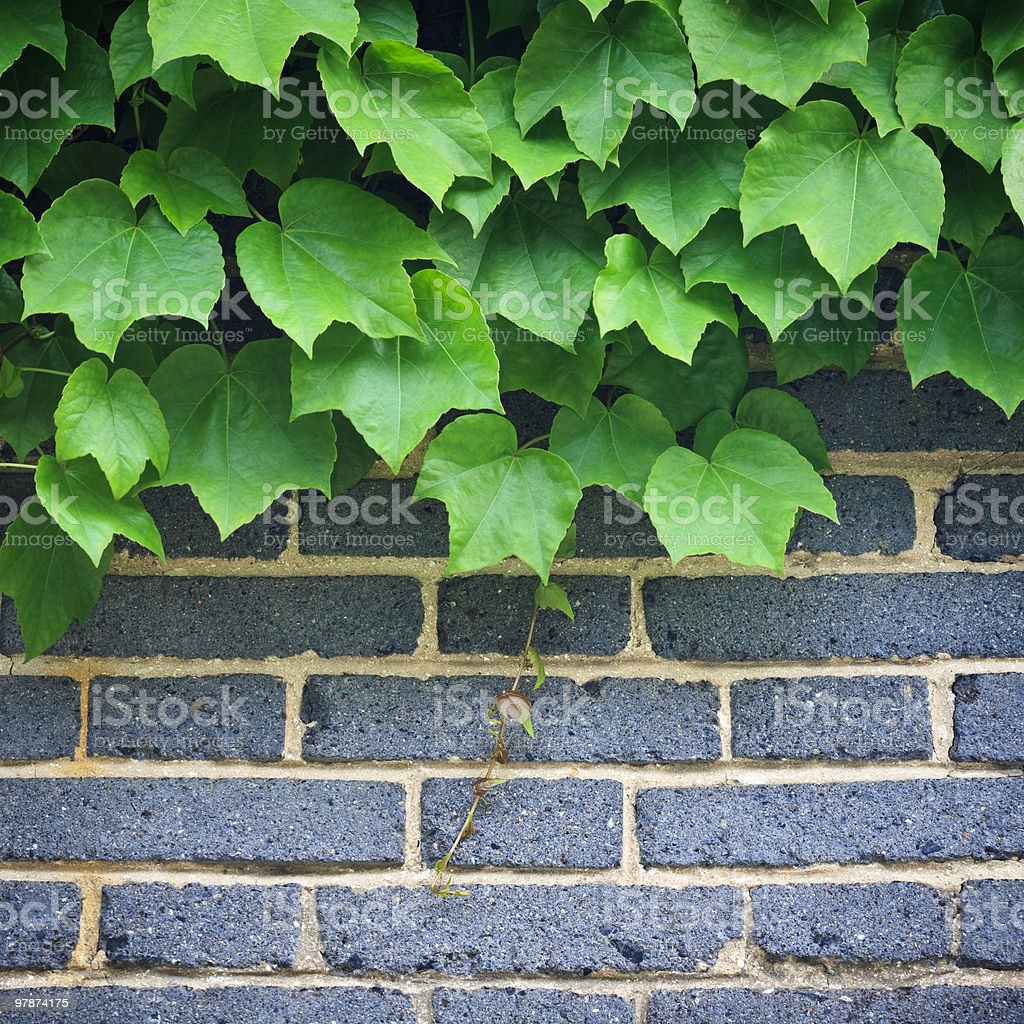 wall and plant royalty-free stock photo
