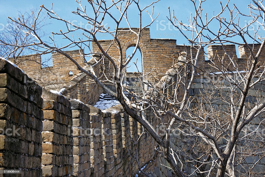 Wall and tree stock photo