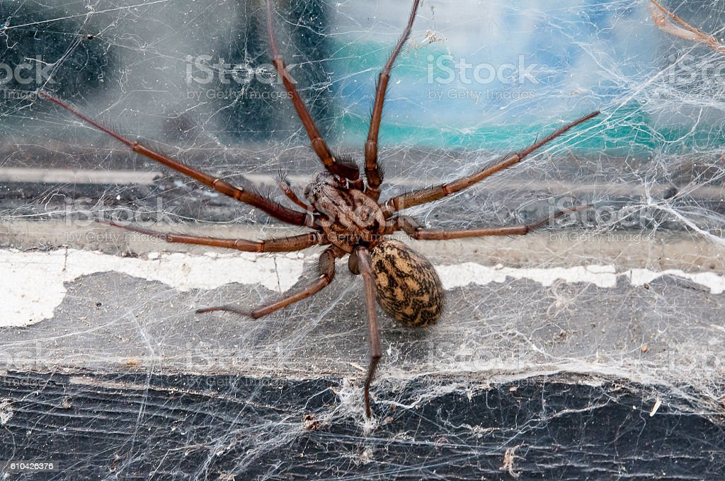 Wall angle spider stock photo