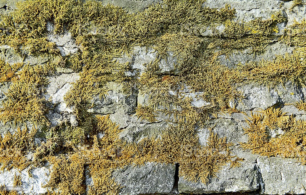 Wall covered by a moss. royalty-free stock photo