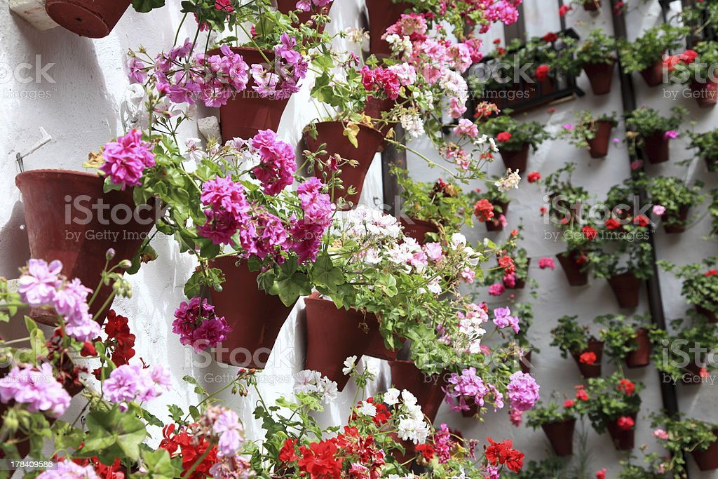 Wall decorated with flowerpots royalty-free stock photo