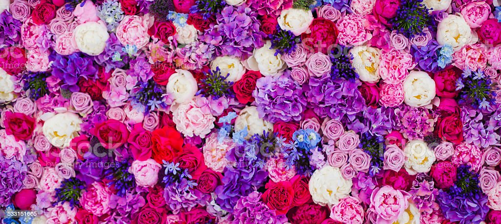 Wall made of roses different colours background stock photo
