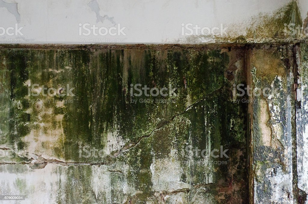 Wall mold stock photo