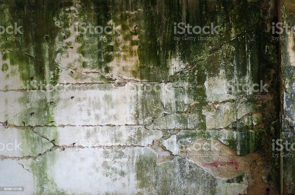 Wall mold stock photo