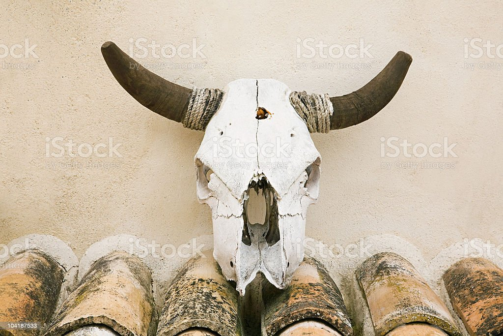 Wall mounted cattle skull, Granada, Spain stock photo