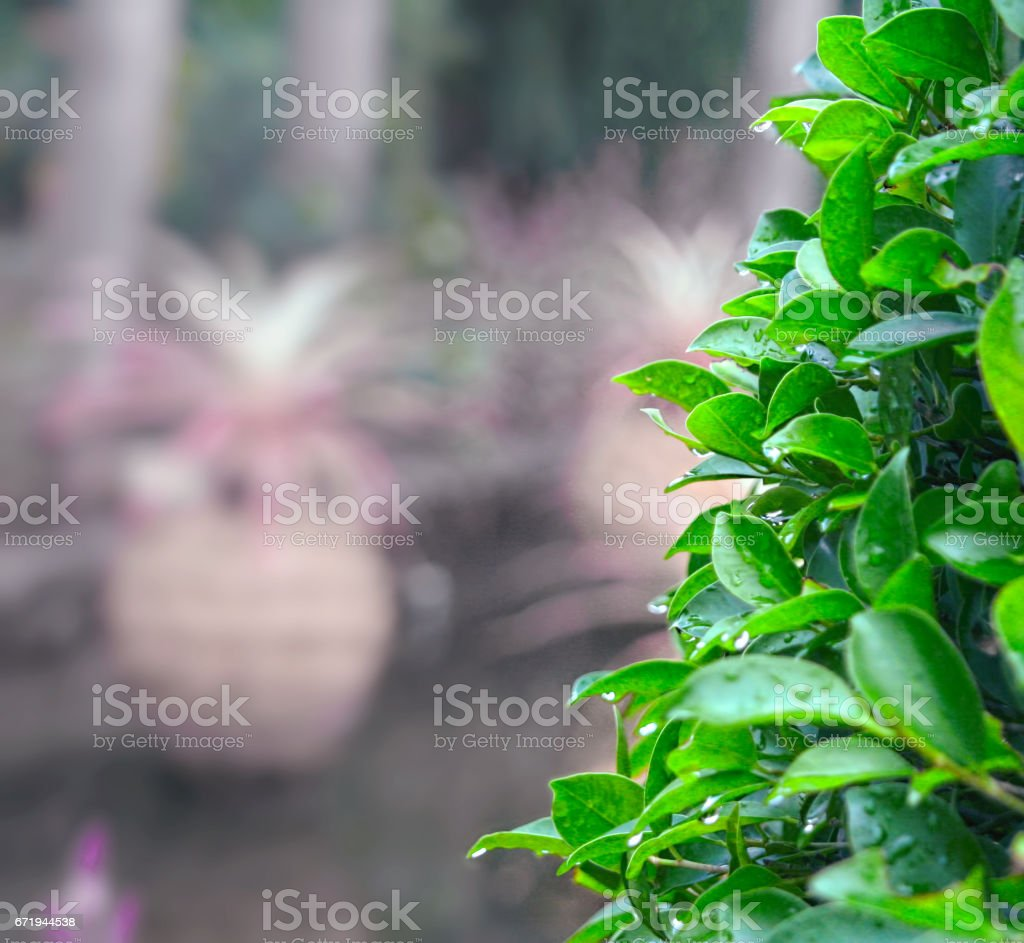 Wall of leaves stock photo