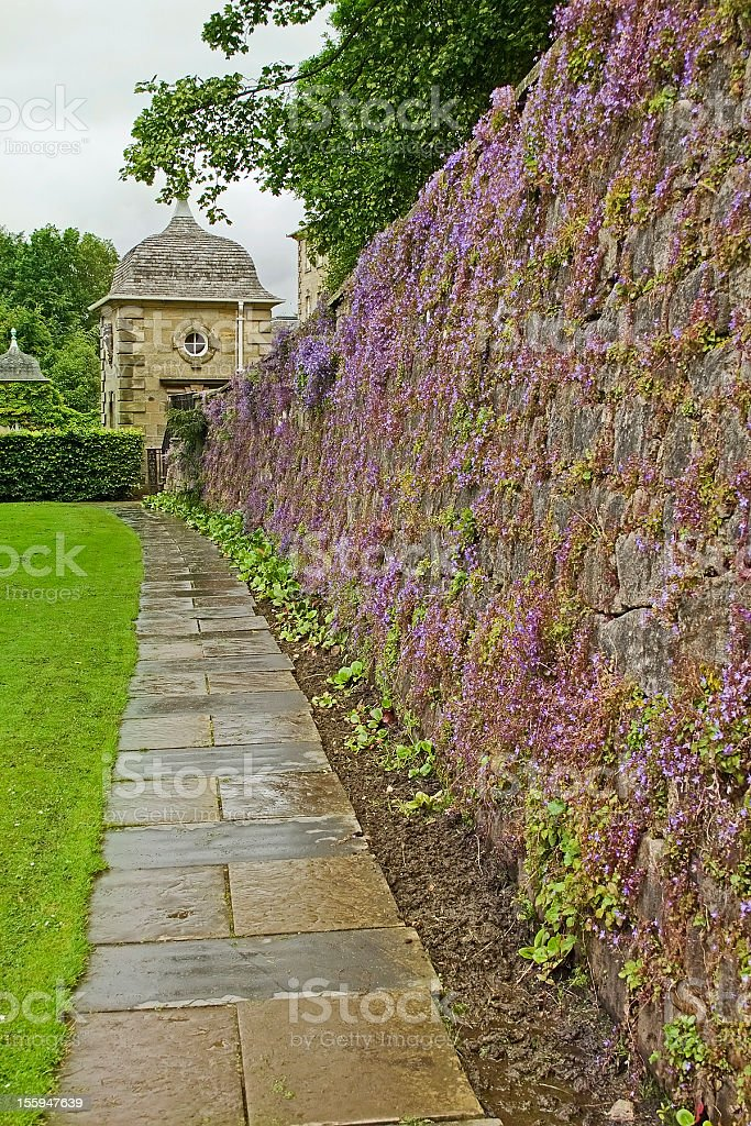 Wall of Purple Flowers stock photo