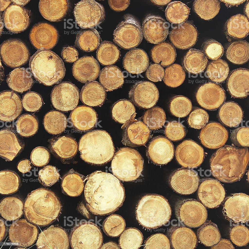 Wall of wood stump stock photo