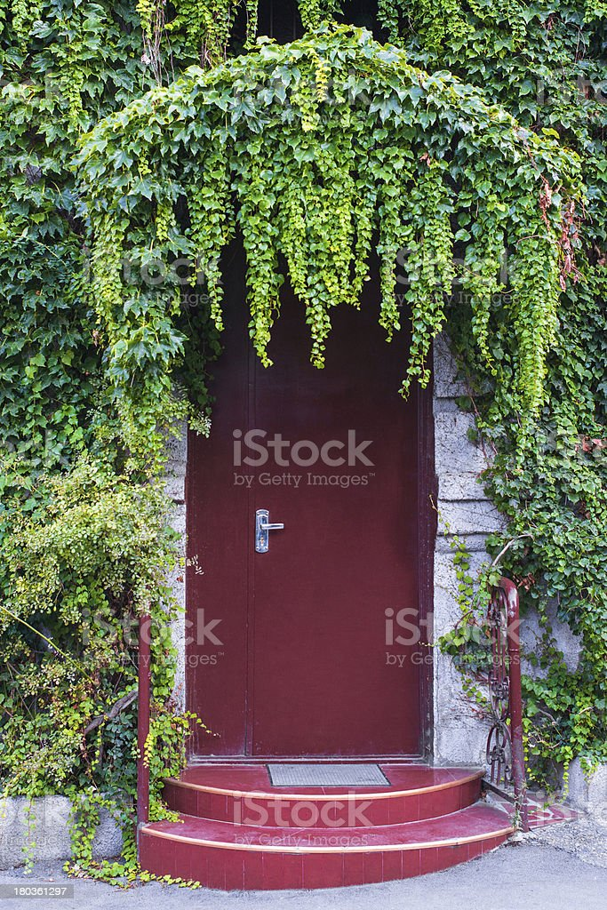 Wall with ivy royalty-free stock photo