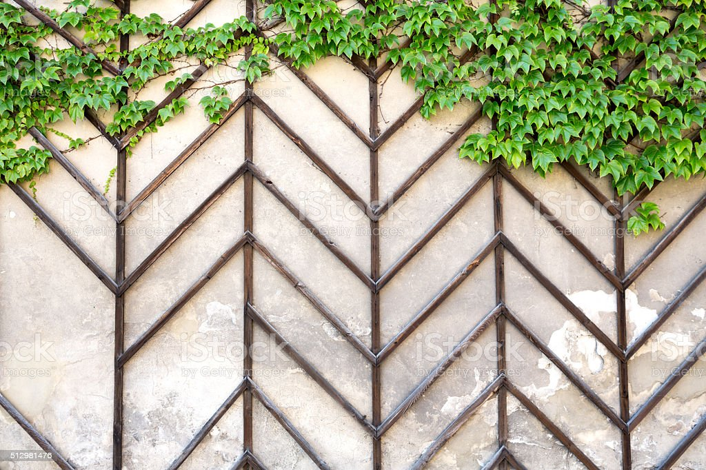 Wall With Leaves stock photo