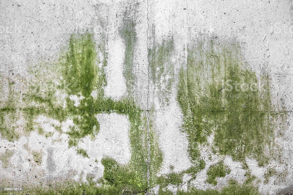 Wall with mold stock photo