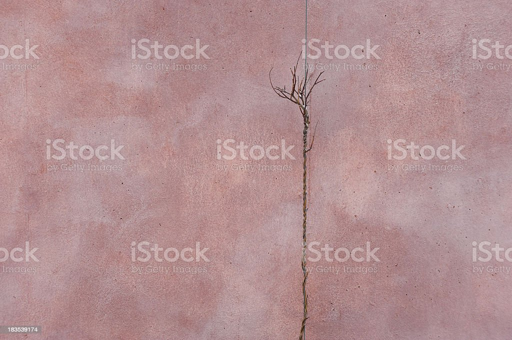 Wall with plant in winter stock photo