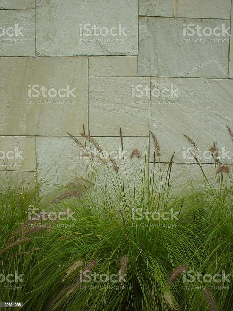 wall with plants stock photo