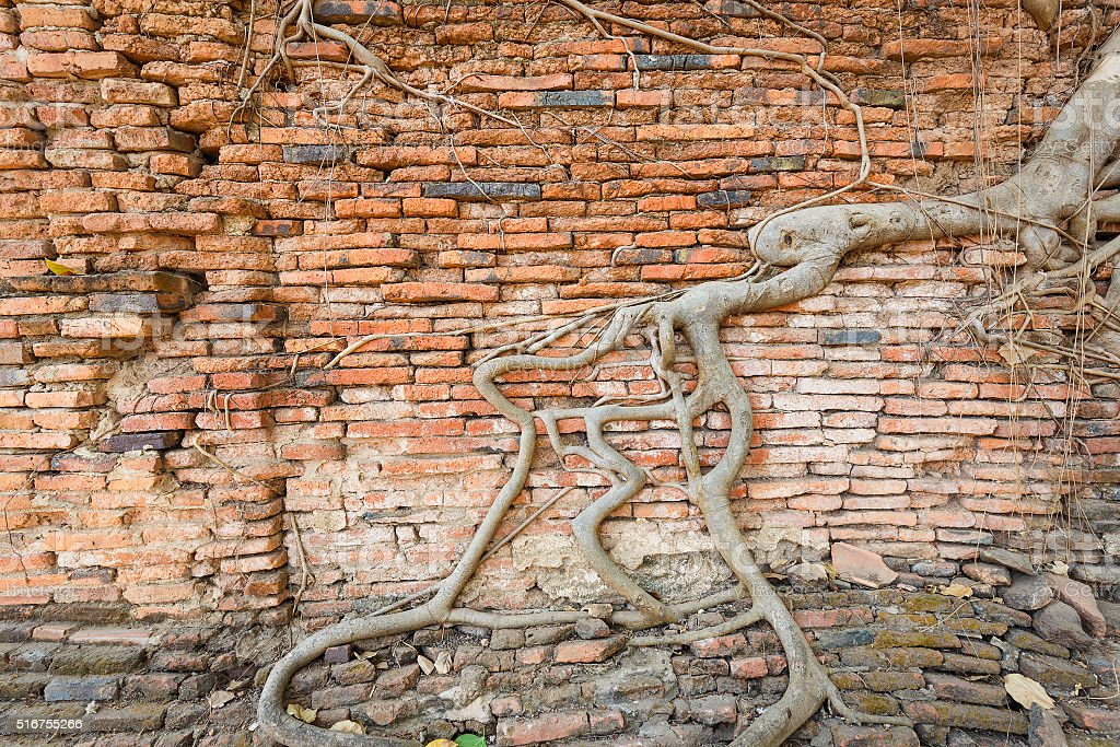 Wall with root cover stock photo