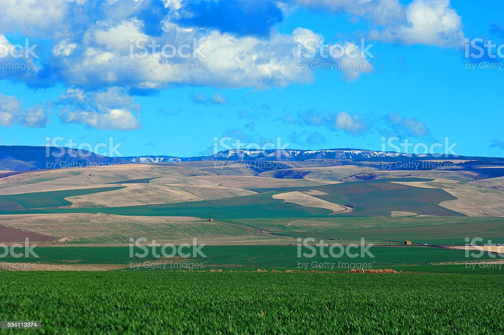Walla Walla area Farmland stock photo