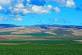 Walla Walla area Farmland