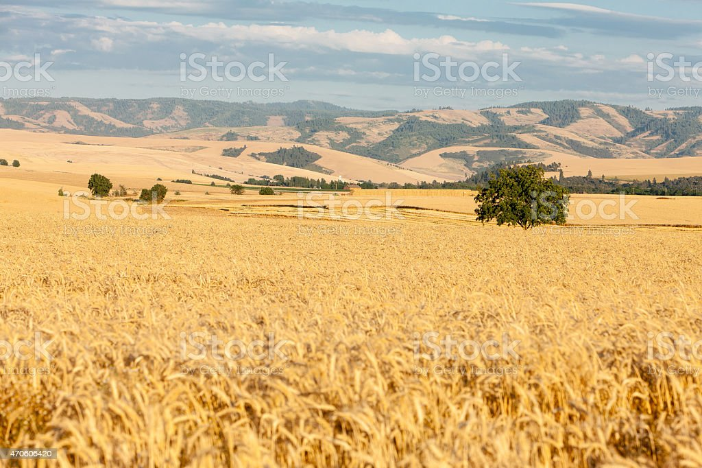 Walla Walla stock photo