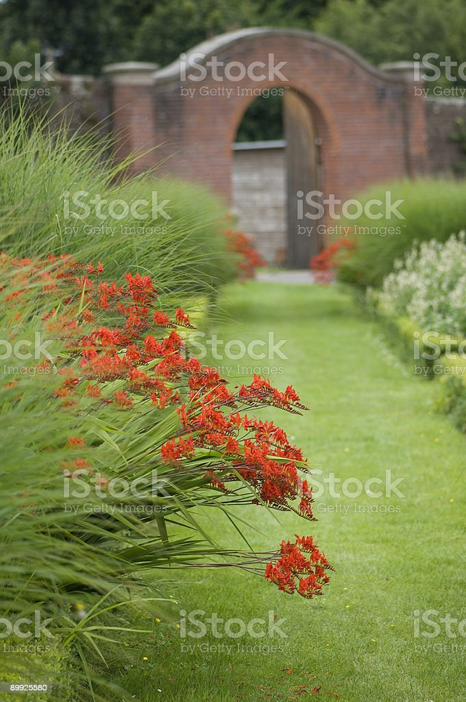 Walled garden and red crocosmia flowers stock photo