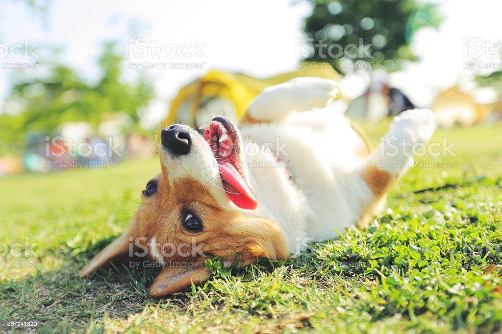 Wallow dog stock photo