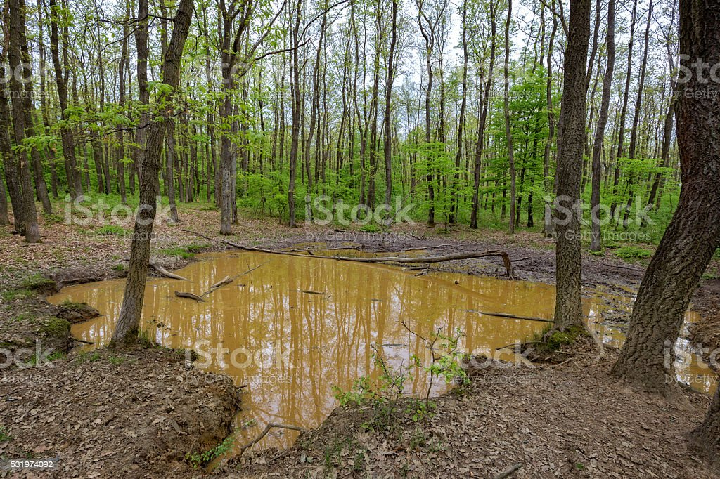 Wallow in the forest stock photo