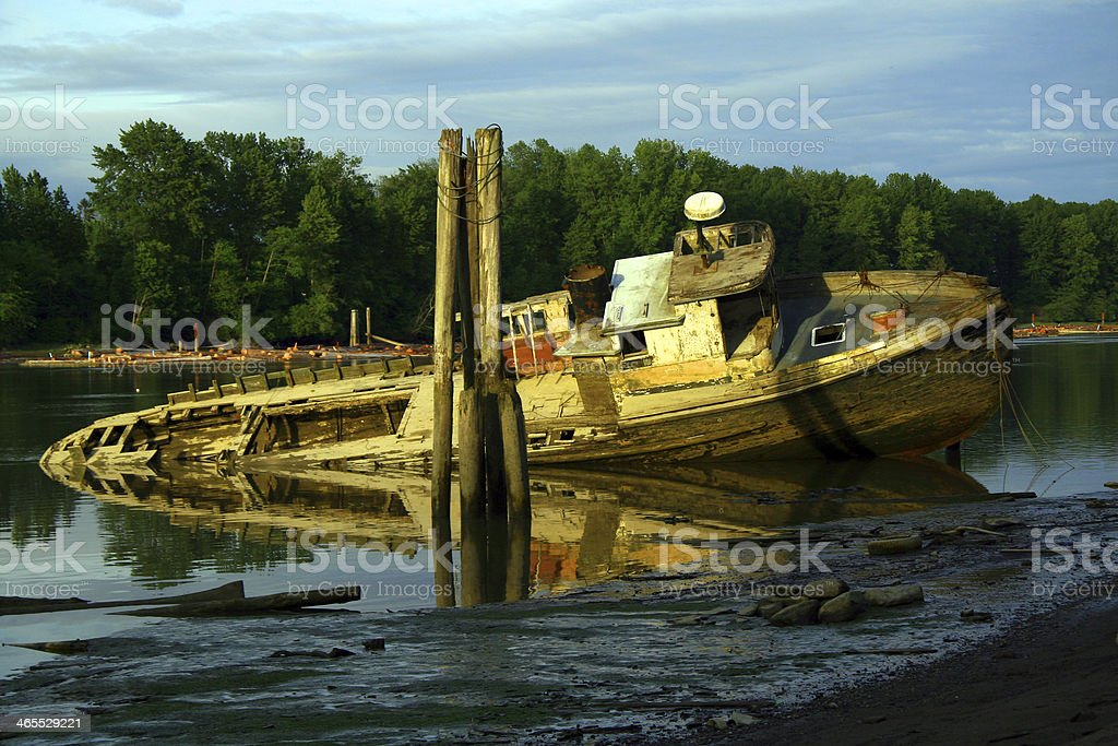 Wallowing in the Shallows royalty-free stock photo