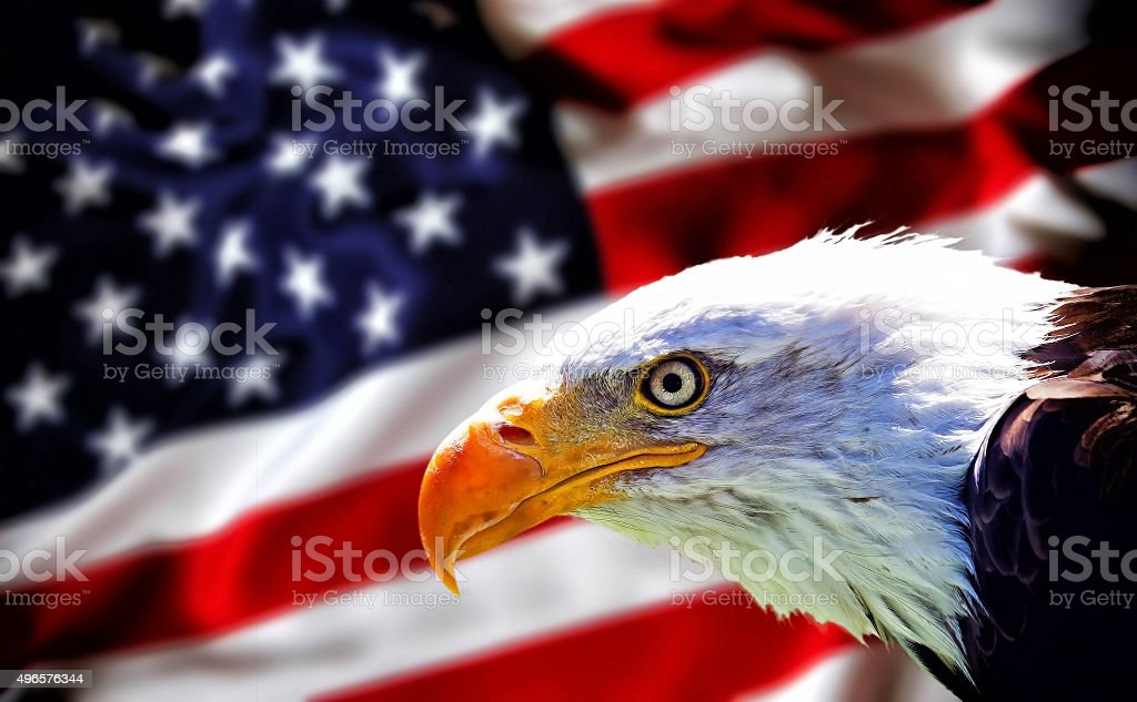 Wallpaper - background. North american bald eagle on blurred american flag stock photo