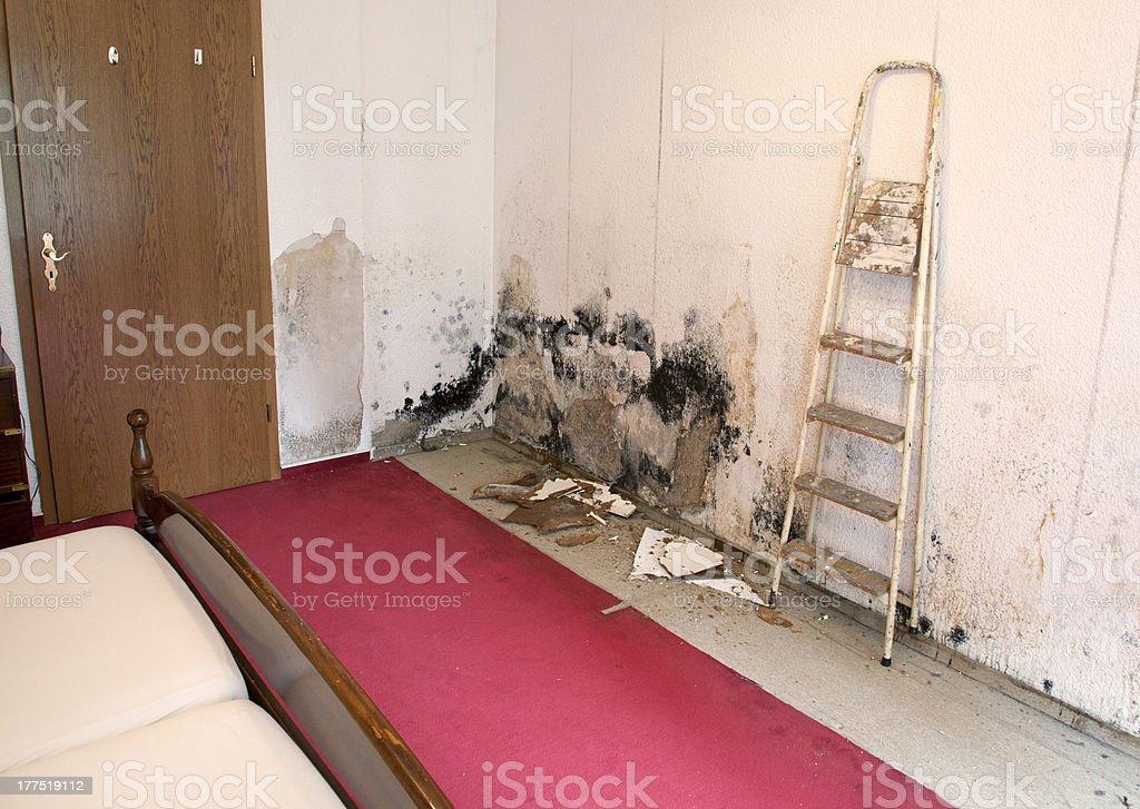 wallpaper in the living room full of mold schimmel stock photo