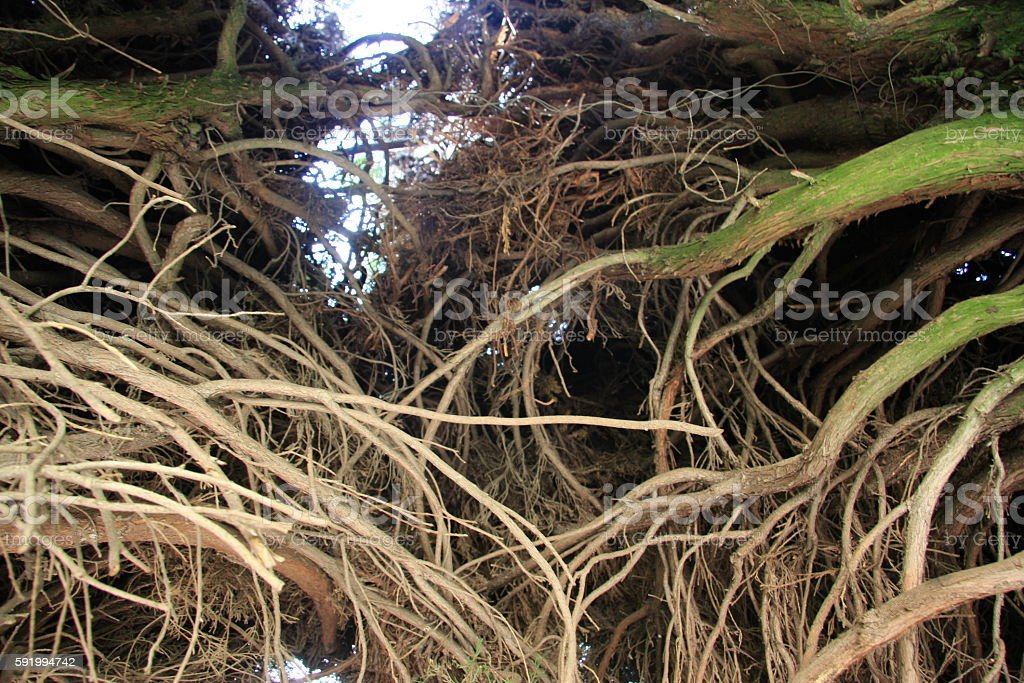 wallpaper roots stock photo