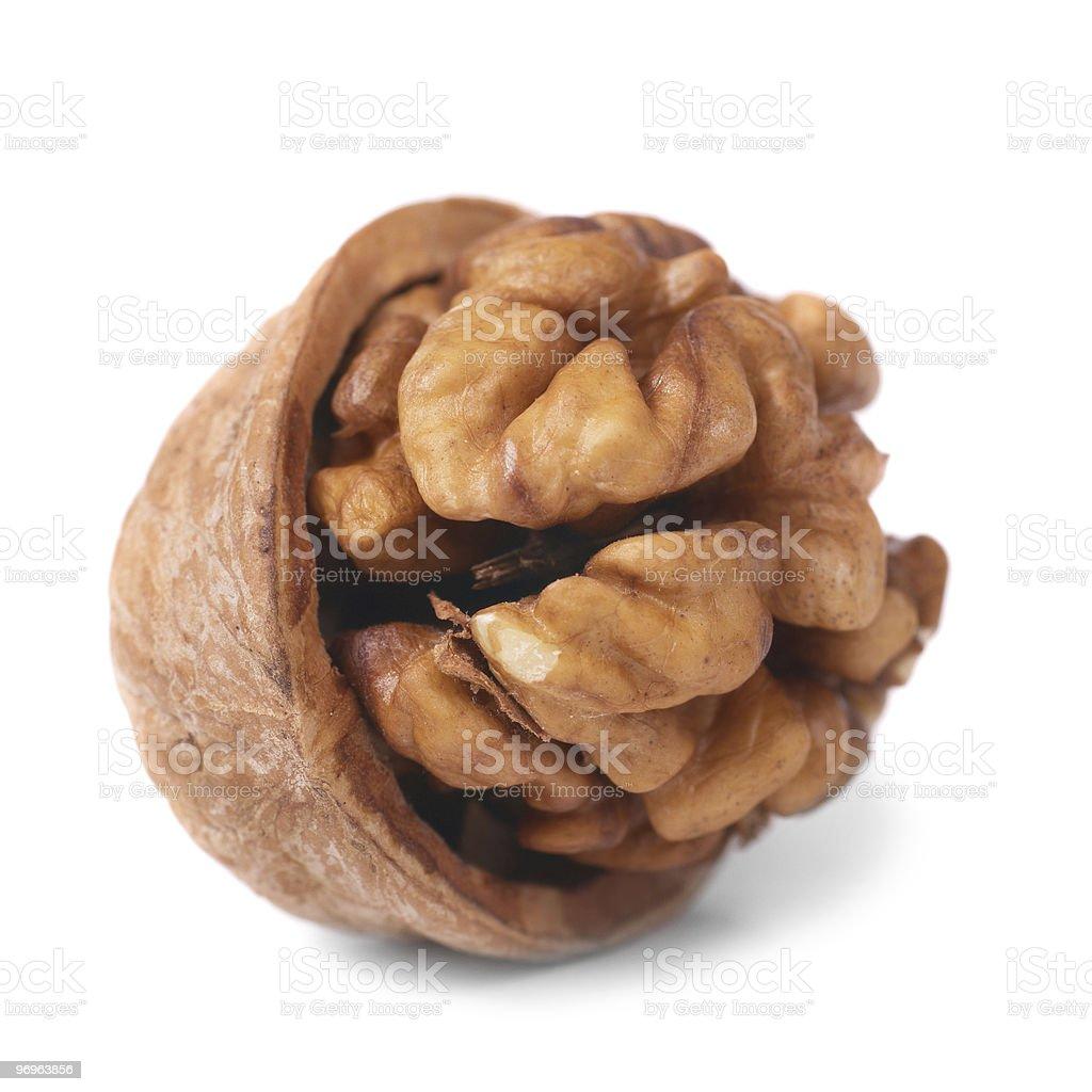 Walnut and shell royalty-free stock photo
