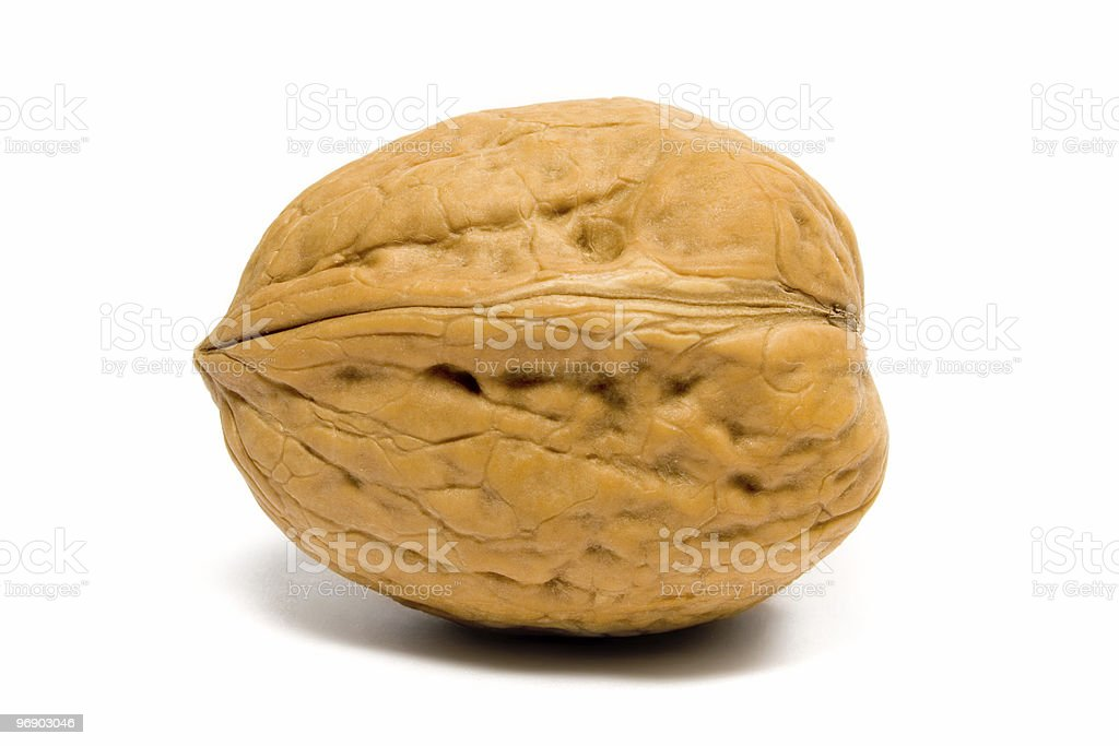 Walnut Laying on its Side royalty-free stock photo