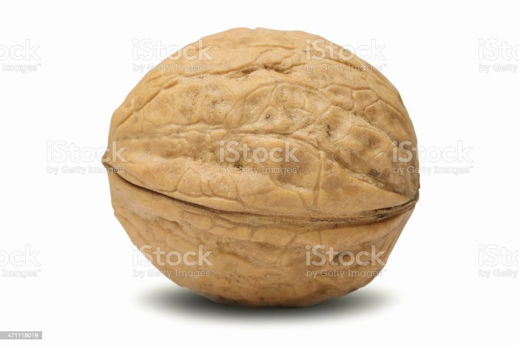 Walnut (isolated) stock photo